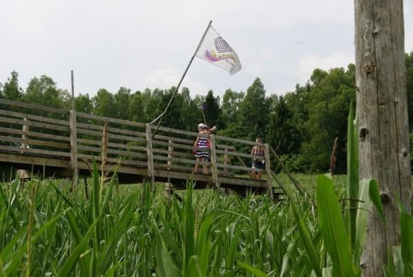 kukurydziany-6